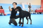 Daskarera Dobermann Kennel